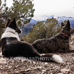 Cinch and Elly, Idaho mountain background