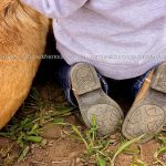 Kiddo boots and pup    Images contained onhellip