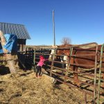 Feeding the horses   childhoodunplugged letthembelittle